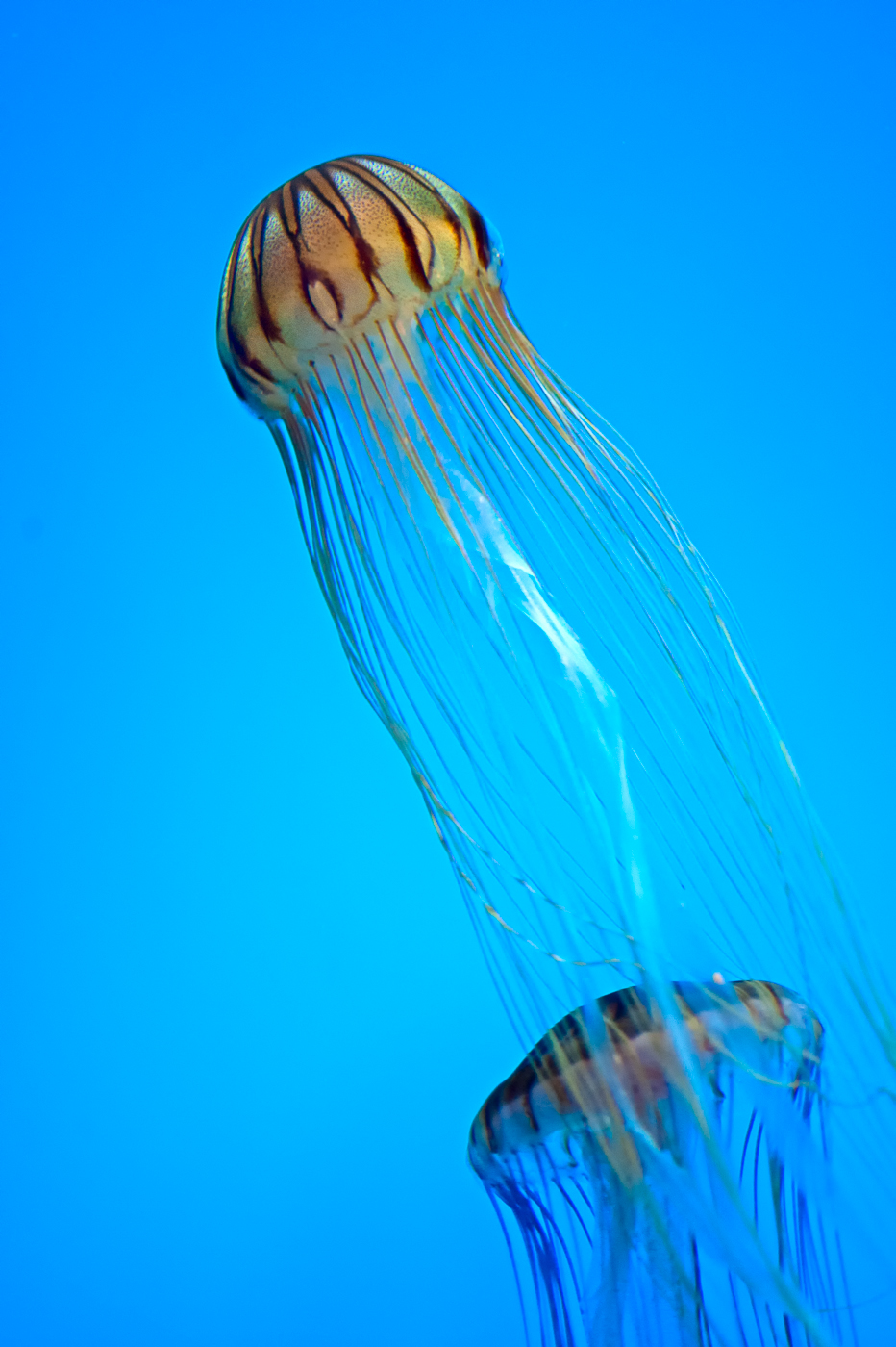 jellyfish photos and video national aquarium baltimore md