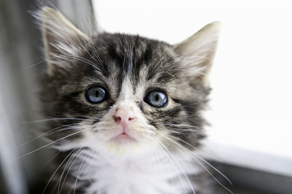 Jake is one of the kittens from the Twilight litter.