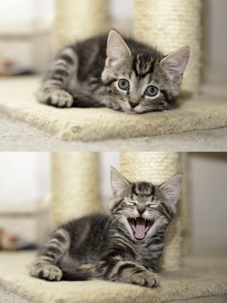 Gracie, yet another Foster kitten.