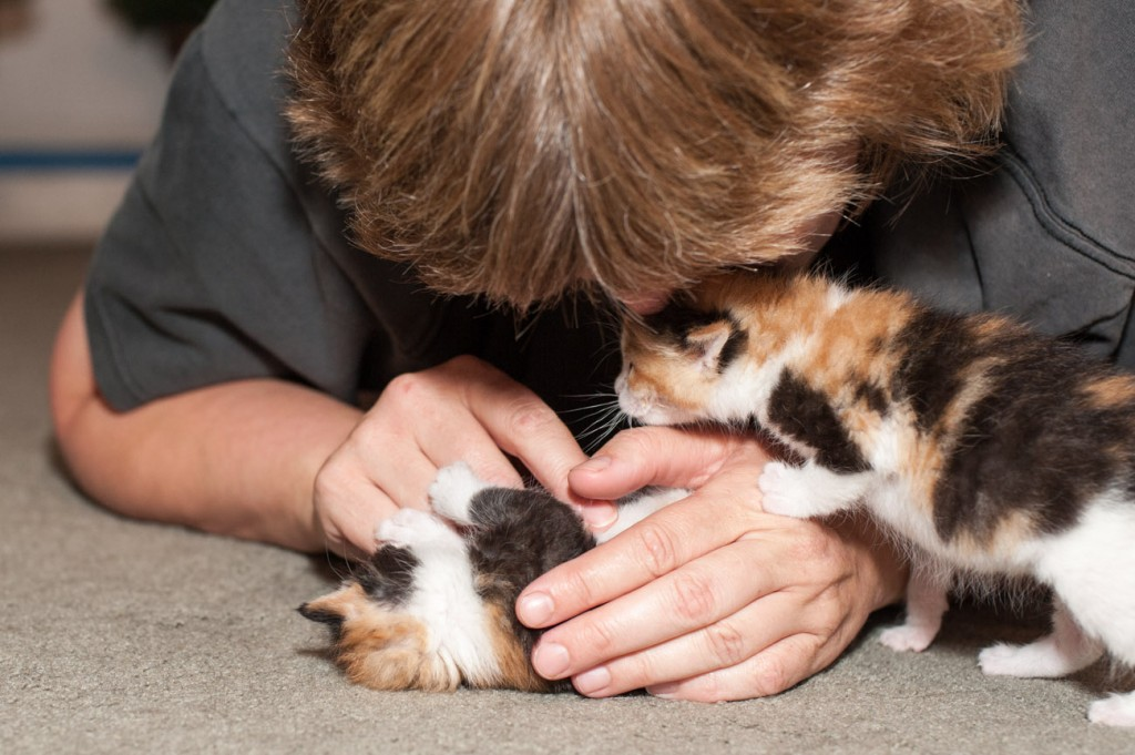 """My wife, """"Kitten"""" The Crazy Cat Lady playing with Phoebe and Piper 2 of the 4 kittens from the Charmed litter."""