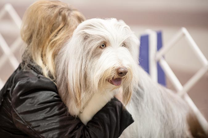 The Celtic Classic Dog Show